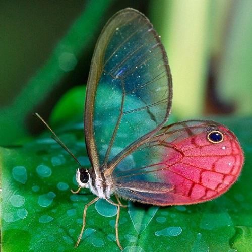 Удивительные факты о животных планеты. Топ-12 фактов - YaUmen
