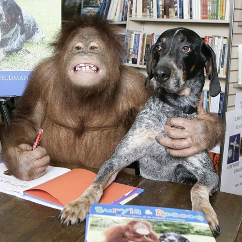 Бывает ли любовь с первого взгляда №1. Дружба орангутанга и обычной собаки