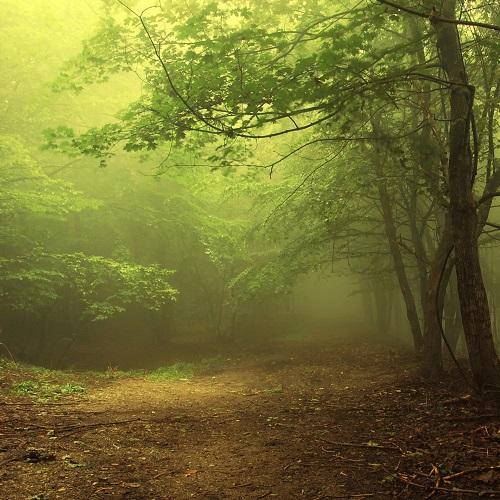 Достопримечательности Румынии. Тайны леса Хойя Бачу-2