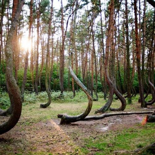 Достопримечательности Румынии. Тайны леса Хойя Бачу-3
