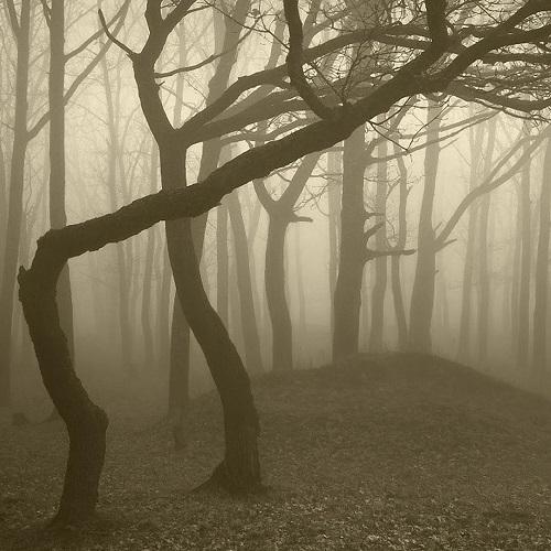 Достопримечательности Румынии. Тайны леса Хойя Бачу
