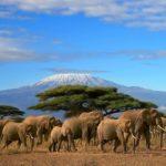 Природа Африки. Удивительные места в мире африканской экзотики