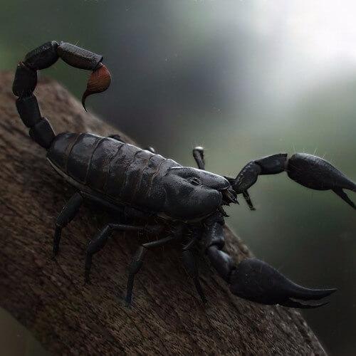 Самые опасные животные Африки. Толстохвостый скорпион