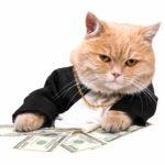 Самые дорогие породы кошек в мире. Мохнатые домашние сокровища
