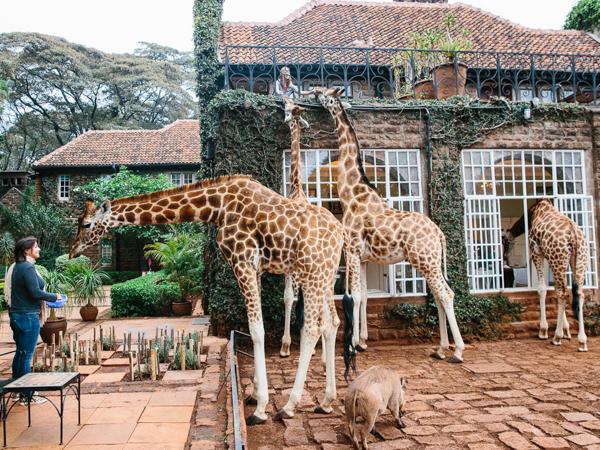 Необычные отели мира. Giraffe Manor Hotel, Кения