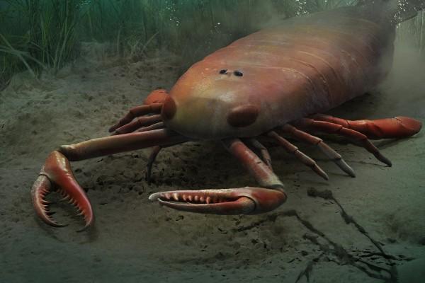 Самые большие животные. Ракоскорпион
