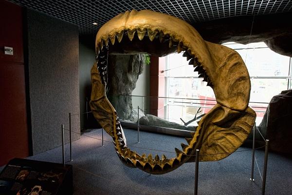 Самые большие животные. Мегалодон