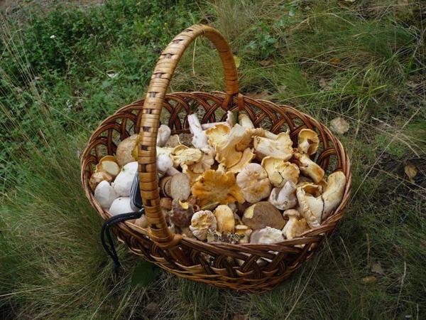 Ядовитые грибы Подмосковья