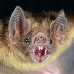 Самые страшные животные. ТОП-10 самых уродливых обитателей планеты