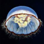 Морские обитатели. Необычные жители глубин