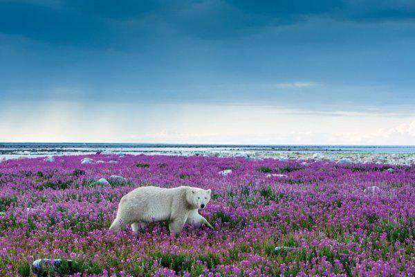 Тайны Антарктиды. Зеленый континент