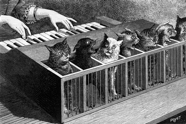 Необычные музыкальные инструменты. Кошачий орган