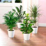 Самые неприхотливые комнатные растения. Выживают даже у холостяков!