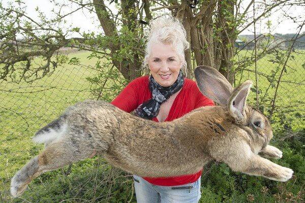 Кролик Дарий