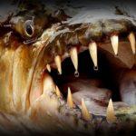 Самые опасные морские животные. Не подходи к ним близко