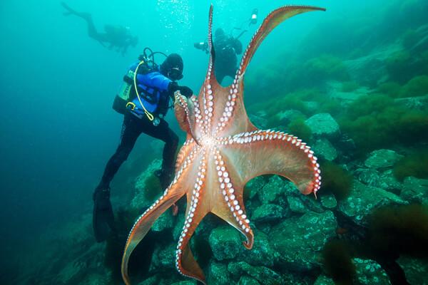Морская звезда Патрик